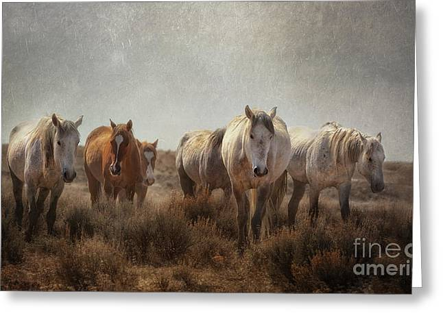Wild Horses Roam Greeting Card by Heather Swan