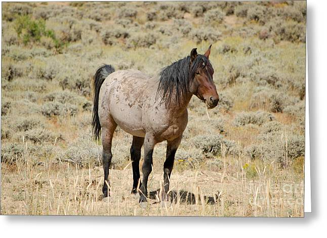 Wild Horses Wyoming - The Mare Greeting Card by Donna Greene