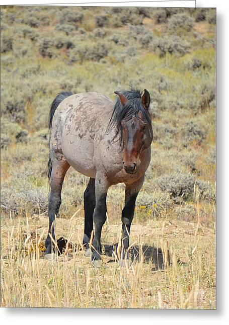 Wild Horses Wyoming - The Mare II  Greeting Card by Donna Greene