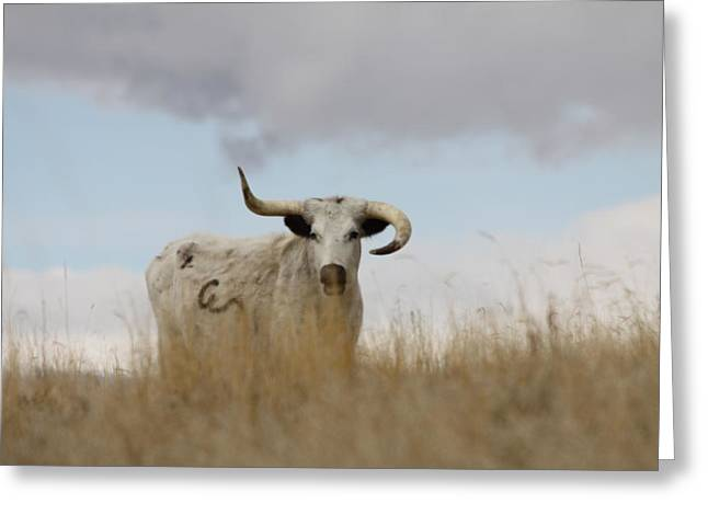 Wild Longhorn Greeting Card