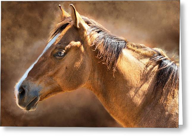 Wild Mustang Greeting Card by Mary Almond