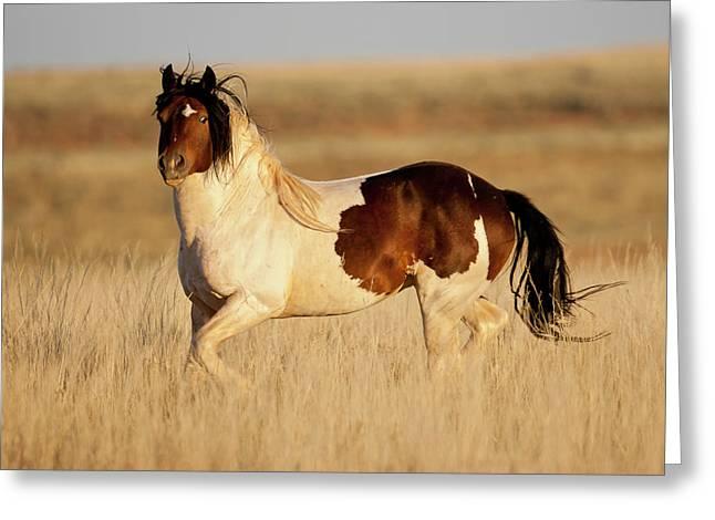 Wild Mustang Stallion Greeting Card