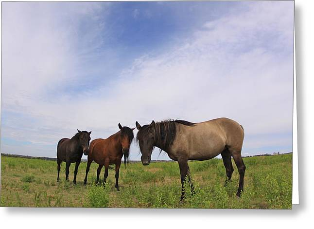 Greeting Card featuring the photograph Wild Mustangs On The High Plains by Kate Purdy