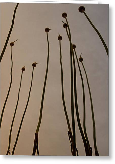 Wild Onions Greeting Card by Stelios Kleanthous