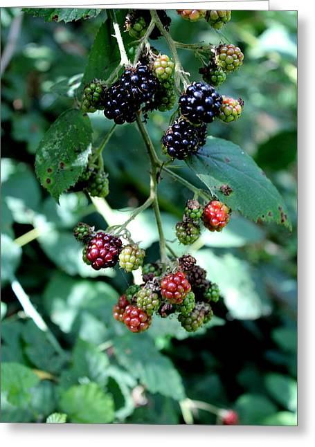 Wild Oregon Blackberries Greeting Card