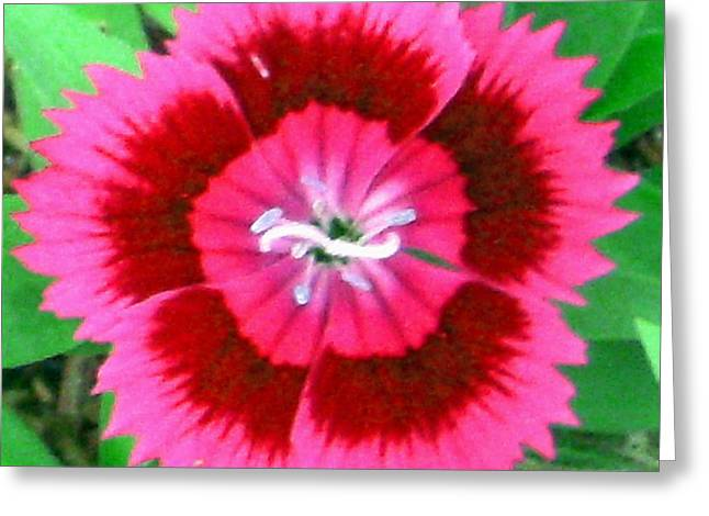 Wild Pink Flower Greeting Card by Giorgio
