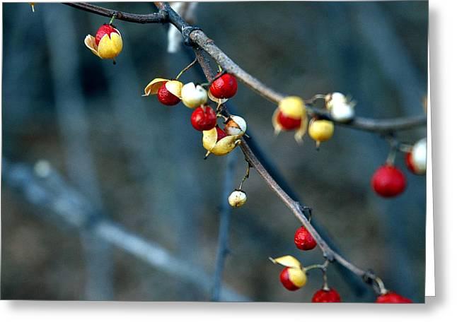 Wild Red Berries Out Of The Shell Greeting Card by LeeAnn McLaneGoetz McLaneGoetzStudioLLCcom