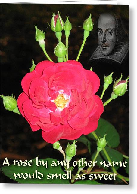 Wild Rose And The Bard Greeting Card by Terry Lynch
