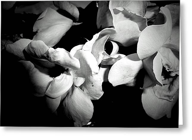 Wild Roses In Black And White Greeting Card by Beth Akerman