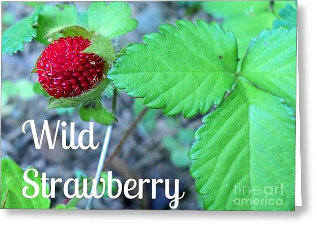 Wild Strawberry Poster Greeting Card