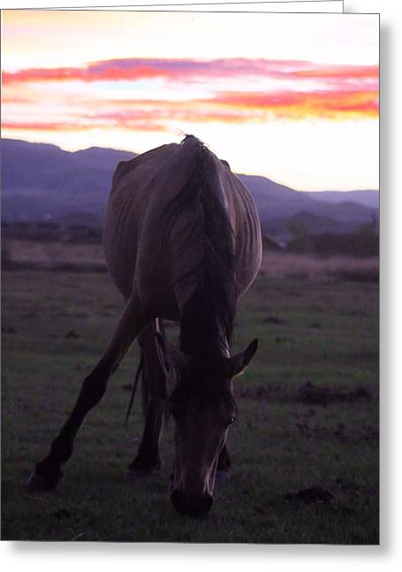 Wild Sunset Greeting Card by Mickey Hatt