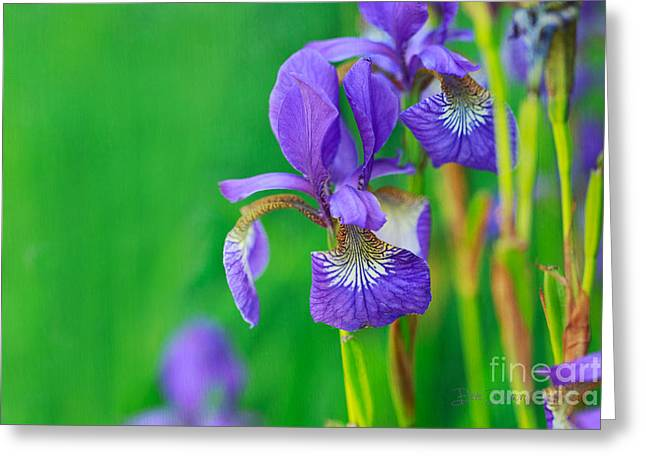 Wild Thing Greeting Card by Beve Brown-Clark Photography