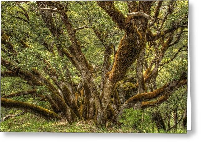 Wild Wood Greeting Card by Ren Alber