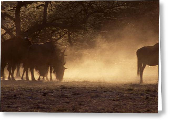 Greeting Card featuring the photograph Wildebeests In The Dust - Botswana by Craig Lovell