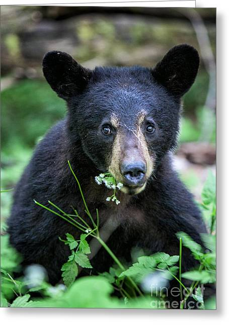 Wildflower Bear Greeting Card by Ronald Lutz