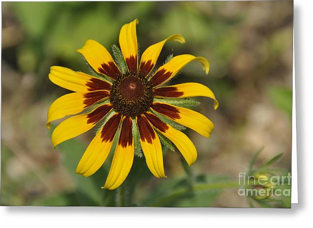 Greeting Card featuring the photograph Wildflower by Cheryl McClure