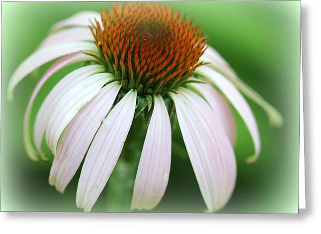 Wildflower In The Park Greeting Card by Maureen  McDonald