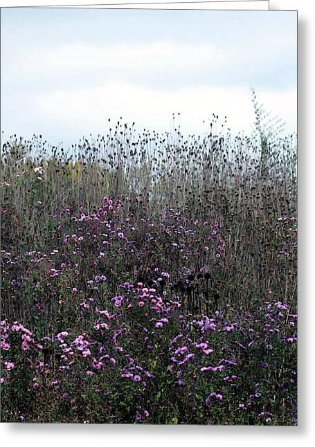 Wildflower Meadow At Markin Glen Greeting Card by Penny Hunt