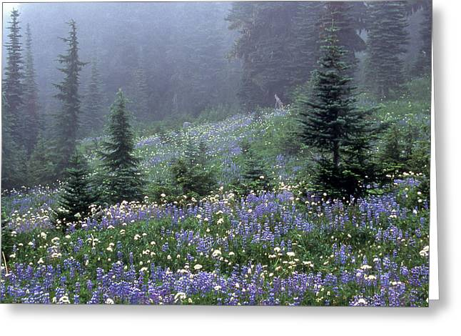 Wildflower Meadow Mt Rainier Greeting Card