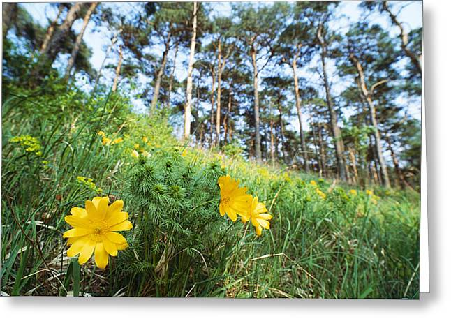 Wildflower Meadow, Unteres Odertal Greeting Card