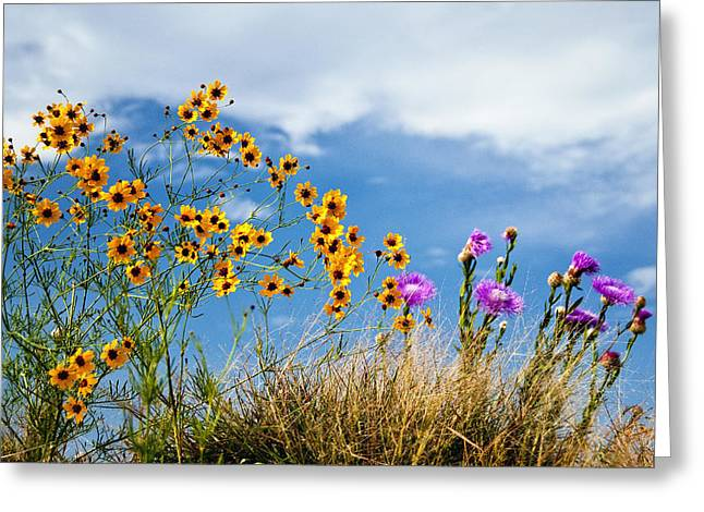 Wildflower Weed Greeting Card by Tamyra Ayles