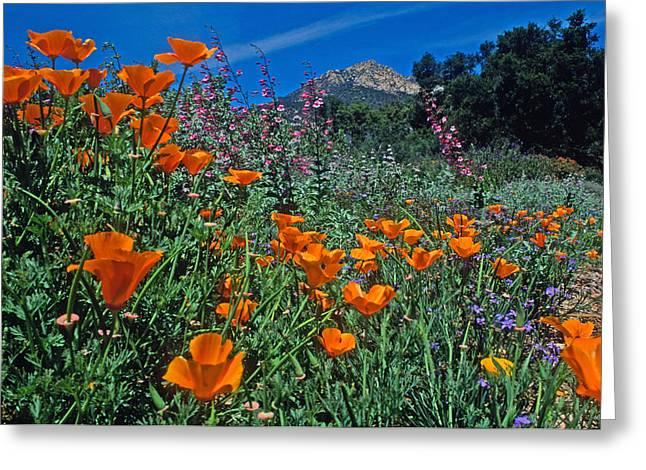 Wildflower Wonderland Greeting Card by Kathy Yates