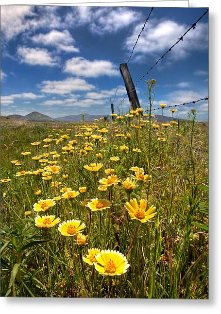 Wildflowers And Barbed Wire Greeting Card by Peter Tellone