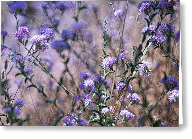 Wildflowers At Mariposa Greeting Card by Bonnie Bruno