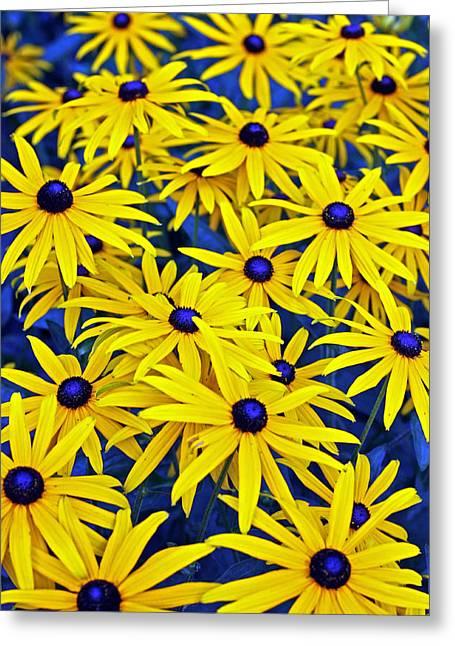 Wildflowers Greeting Card by James Mancini Heath