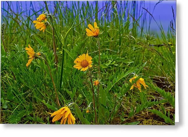 Wildflowers Greeting Card by Jen TenBarge