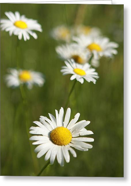 Wildflowers Greeting Card by Kathryn Mayhue