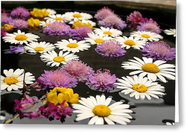 Wildflowers On Water Greeting Card