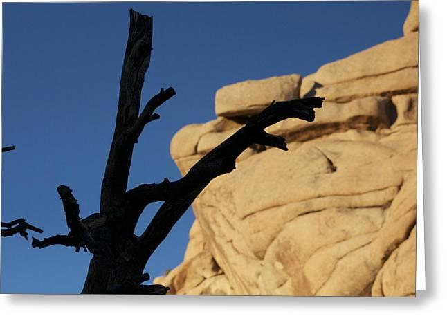 Will Desert Give Life Greeting Card by Carolina Liechtenstein