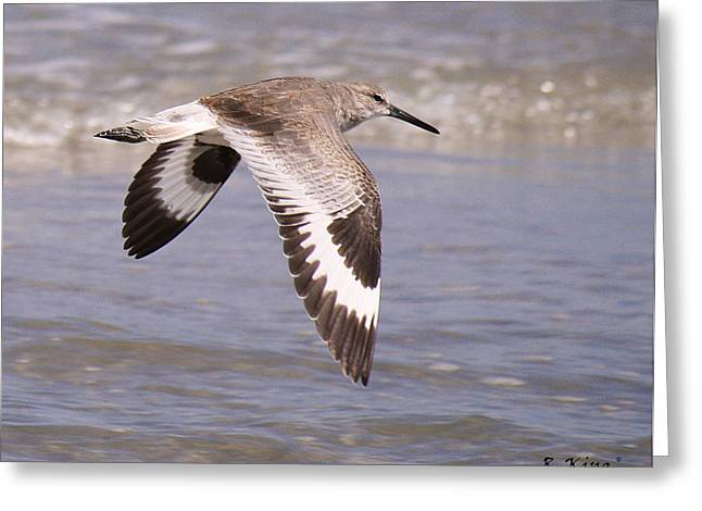 Willet In Flight Greeting Card by Roena King