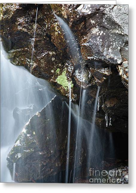 Willey Brook - White Mountains New Hampshire  Greeting Card by Erin Paul Donovan