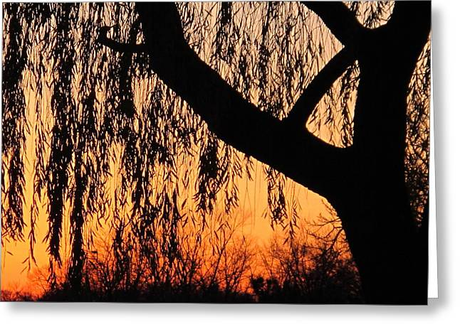 Willow At Sunset Greeting Card by Valia Bradshaw