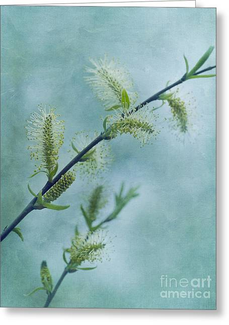 Willow Catkins Greeting Card by Priska Wettstein