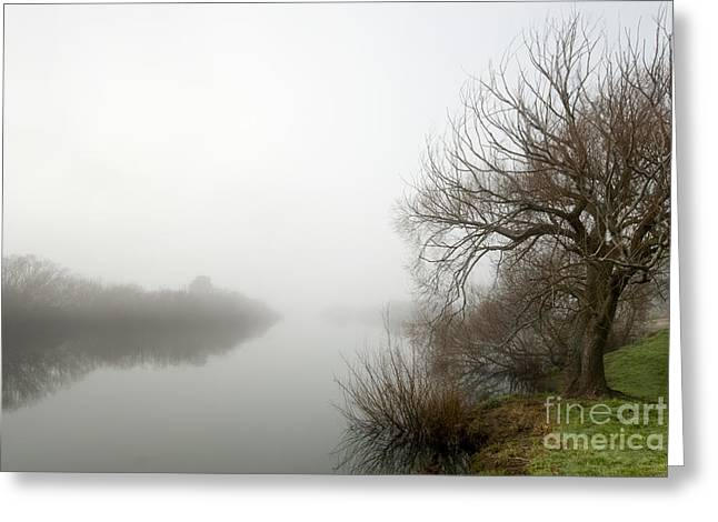 Willow In Fog Greeting Card by David Lade