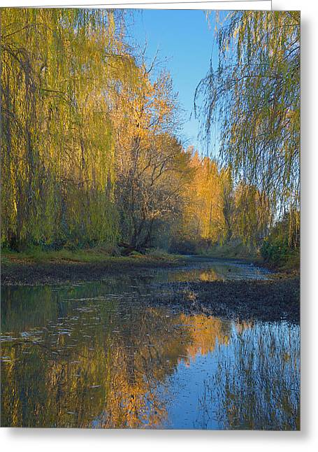 Willow Greeting Card by Toshihide Takekoshi
