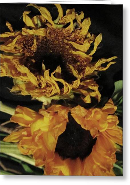 Wilted Sunflowers Greeting Card by Todd Sherlock