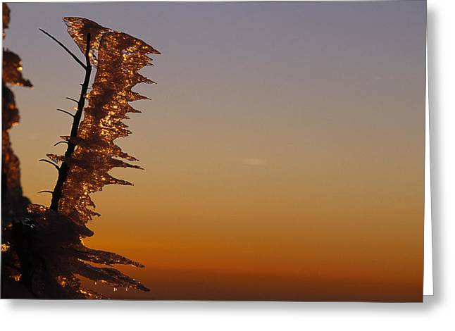 Wind-blown Icicles On A Tree Branches Greeting Card