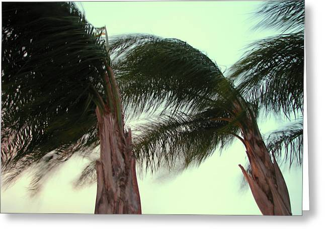 Wind Blown Greeting Card by T Guy Spencer