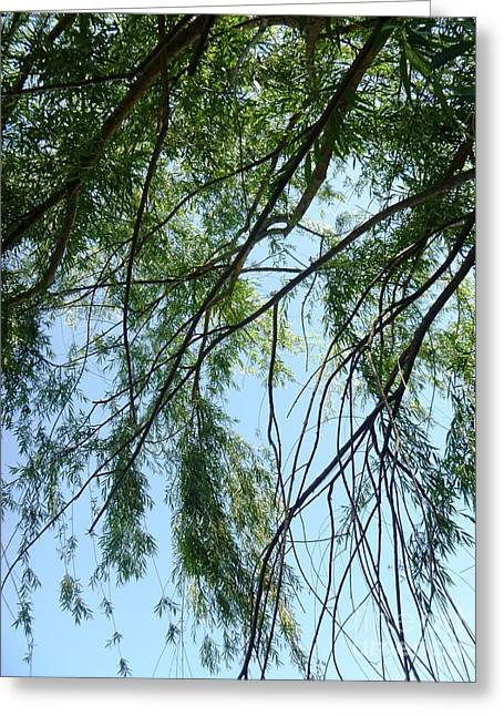 Wind In The Willow Greeting Card by Alys Caviness-Gober
