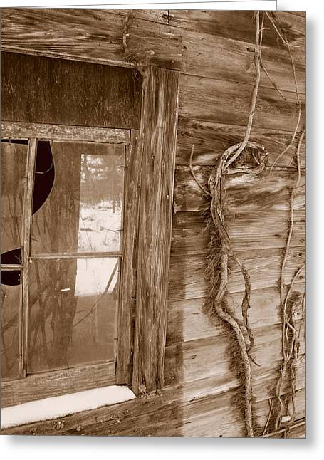 Window And Vine Greeting Card