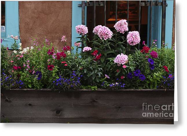 Greeting Card featuring the photograph Window-box Flowers  by Sherry Davis
