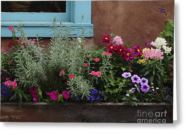 Greeting Card featuring the photograph Window-box II by Sherry Davis