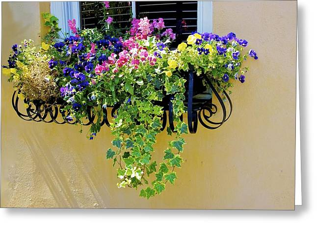 Greeting Card featuring the photograph Window Box by Ralph Jones