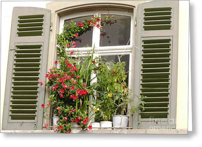 Window With Flower Pots Greeting Card