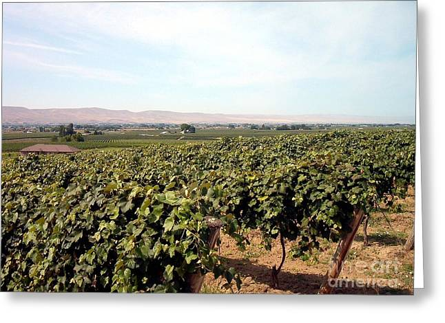 Wine Country Greeting Card by Charles Robinson