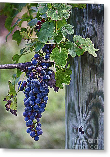 Winery Harvest Greeting Card